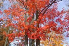 Colors of Michigan..fall beauty