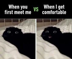 Funny Cat Memes With Captions Never Fail To Make Us LOL #funny #picture