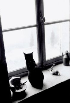 The cat behind the window, Gordes, 1959, by Willy Ronis