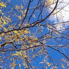 Blue Skies & Autumn Days