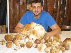 Un fungo da 1,640 Kg! L'ha trovato Marco D'Aliesio, titolare del Rifugio Pratorotondo a Varazze.