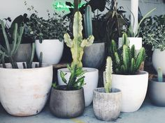 Cacti + Concrete + White  This Friday & Saturday we will have some reductions on our ex hire ranges including these large white painted terracotta pots pictured. Keep an eye on our my story tomorrow for some sneak peaks. See you tomorrow 10-4 🌵