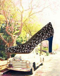 Koo en staart leopard 2014