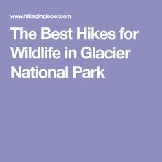 The Best Hikes for Wildlife in Glacier National Park