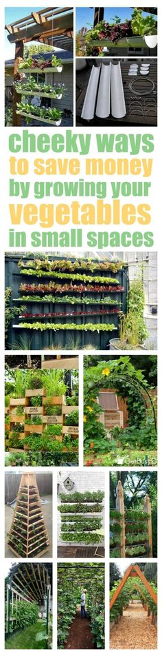 Definitely CHEEKY! And a little bit sneaky, too. Never thought of attaching gutters to a wall to grow lettuce. How awesome! Check out these vertical vegetable garden ideas that will solve your garden space problems so you can start growing your own veggies today!  #GardeningIdeas