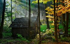 9美麗的房子在森林裡 - llowll