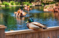 Disneyland - Disneyland Resort Photos