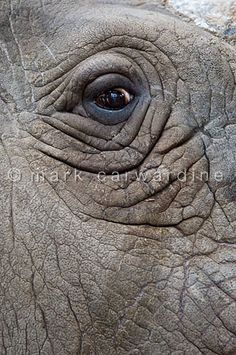 """The Eye of The Rhino!""  (Photo By: © Mark Carwardine.)"