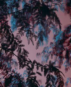 Brandongeorgeko-photography-a_tree_to_climb