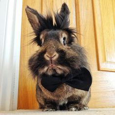 Awesome Bunnies ♥Bunnies know that bow ties are cool!