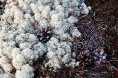 Suomi Tour: Hyytämän nimikalliot Finland, Tours, Nature, Plants, Naturaleza, Flora, Nature Illustration, Plant, Scenery