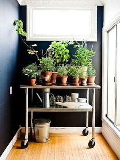 Herbs That Grow Inside On Pinterest Herbs Herbs Garden And Growing