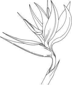 Bird of Paradise Flower coloring page