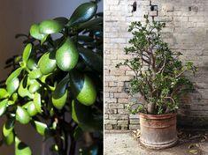 10 kiirthatatlan szobanövény   Hobbikert Magazin Plants, Planters, Plant, Planting