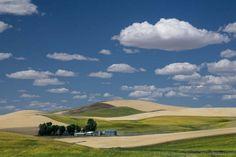 Fields in the Palouse © 2015 Patty Hankins