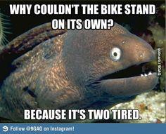 Bad joke eel strikes again!