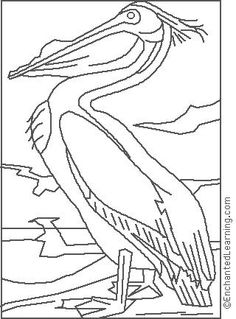 Audubon: White Pelican Coloring Page   EnchantedLearning.com