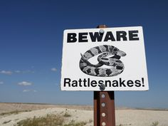 On Rattlesnakes, Marketing and Building a Business