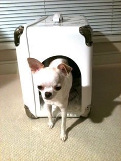 Just arrived from Italy, my luxury dog house by Marco Morosini. Gorgeous...