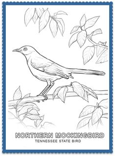 State Bird Coloring Pages By