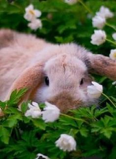 ~♥~  Stop animal testing on rabbits and all animals. L'Oreal doesn't test animals in U.S.A., no, they let China do it!!