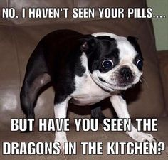 FUNNY ANIMAL PICTURES OF THE DAY – ToGAGs – Daily GAGs, JOKEs and LOLs!
