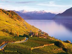 vineyard switzerland dinner - Google Search