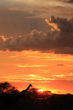 Uk Trip, Ivory Coast, Rest Of The World, Global Warming, Wildlife Photography, Tanzania, Continents, South Africa, Giraffe