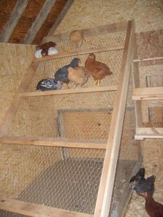 I love the graduated design of this roost. Theres plenty of room for them to spread out but no one is sitting underneath another hen and in the direct line of fire!