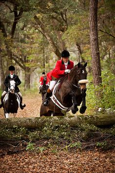 Fox Hunting in Ireland. I want to do this one day!