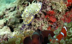 Dive-trip-sipidan marine park Kelp Forest, Cape Town, Scuba Diving, Trips, Park, Places, Travel, Snorkeling, Lugares