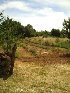 Our #Organic #Lavander #Maremma #Tuscany