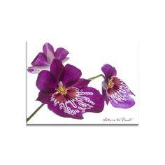 Blumenbild auf Leinwand oder Kunstdruck prächtiger lila Orchidee