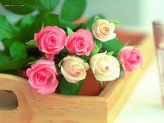 36 Valentine Flower Pictures.  36  Wall001comvalentinerose36jpg