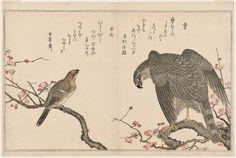 (Japan) Falcon and Shrike from the album Momo chidori Myriad Birds by Kitagawa Utamaro (1753- 1806).