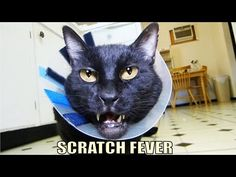 Talking Kitty Cat 40 - Scratch Fever - YouTube