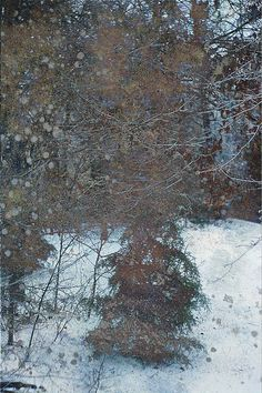Evergreen Trees In Snow, print by Suzanne Powers $22.00