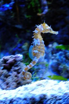 seahorse one of natures most fascinating creatures Underwater Creatures, Ocean Creatures, Underwater World, Under The Ocean, Sea And Ocean, Beautiful Sea Creatures, Animals Beautiful, Leafy Sea Dragon, Sea Monsters