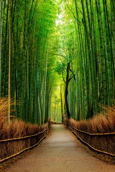 ~~Path of Bamboo ~ bamboo forest, Kyoto, Japan by Michael Riehl~~
