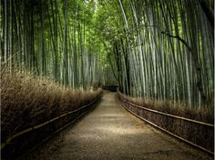 Bosque de bambú, Japón