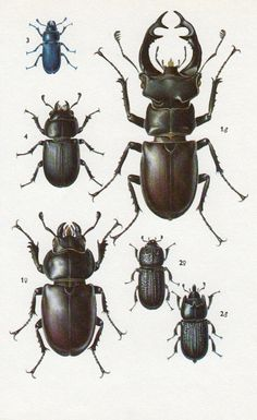 RHINO BEETLE other Beetles and Bugs vintage by theStoryOfVintage