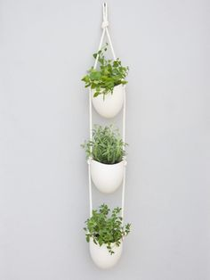 Ideas. Dazzling Design Indoor Herb Garden Ideas. Cute Indoor Herb Garden Ideas With Indoor Herb Garden And Wall Mount Plants Stand And White Color Plants Pots