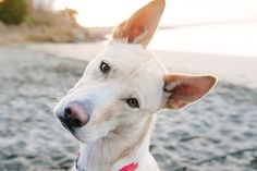 Juneau the Husky Mix by Photo Lab Pet Photography | Pretty Fluffy
