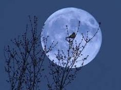 Αποτέλεσμα εικόνας για blue moon