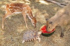 Just bonding over some fresh watermelon, as friends do. | 33 Photographs Of The Most Magical Place On Earth