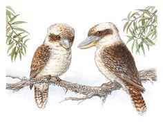Kookaburras - 8x10 inches (20x25cm) Australian Wildlife Art Print - Fine Art Giclee Reproduction of Watercolour and Ink Painting. $25.00, via Etsy.
