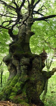 Gnarled.......into the wood....we wandered............