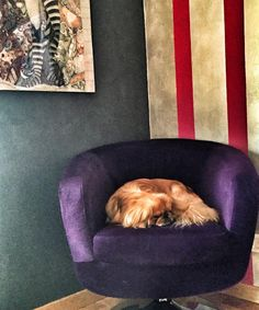 Nella cuccia da cani ci andate voi umani! Io ho la mia poltrona!  #mydog #snoblife #pekistagram #pechinese #pekingese #paco #dogstagram #stupidiumani #homedecor #colorful #homedesign #homesweethome by lisa3101 http://discoverdmci.com