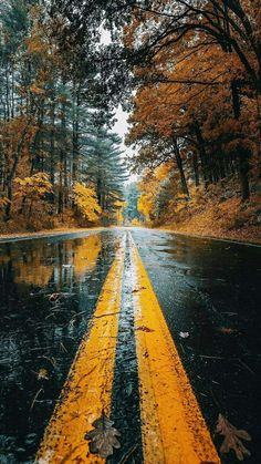 Autumn Wet Road Reflection IPhone Wallpaper - IPhone Wallpapers