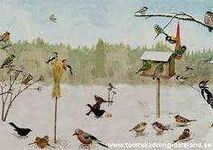 svenska fåglar - Sök på Google